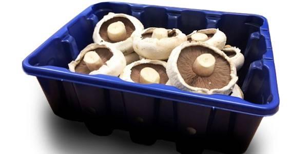 Waveney Mushrooms